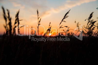 Dry spare of grass in sunset dawn