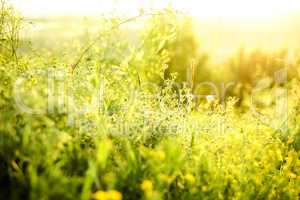 Beautiful rural landscape with sunrise over a meadow. Soft focus
