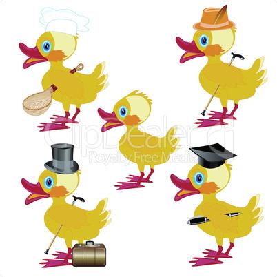 much ducks.eps