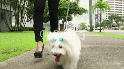2 Businesswoman Commuting To Office With Her Dog