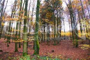 Mischwald im Herbst mit buntem Laub
