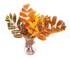Multicolor autumn rowan leafs in glass