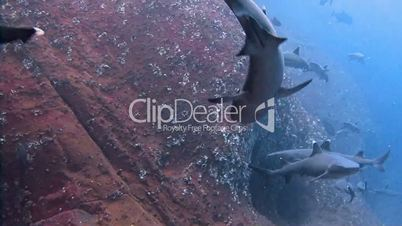 Great diving with the sharks at the rocks of ROCA Partida in the Pacific ocean, Mexico