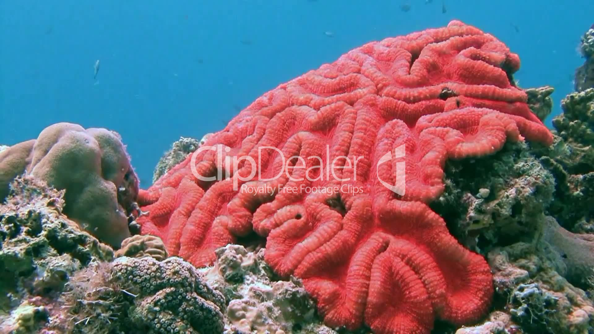 Gorgeous colorful coral reef near Malapascua island in the ...