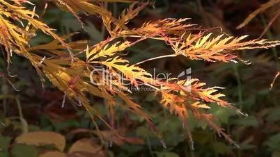 Bright colors of autumn in the city garden of Krasnodar, Russia