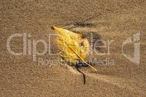 herbstlich verfärbtes Blatt am Strand