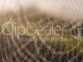 Spinnweben mit Morgentau
