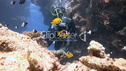 Underwater videographer, filming a symbiosis of clown fish and anemone in the Red Sea