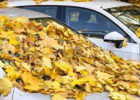Herbstlaub auf parkenden Autos