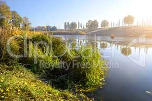 Reeds on autumn river