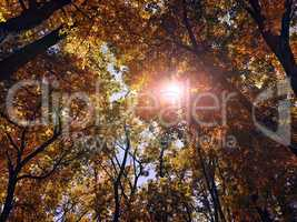 sun shines through the trees in the autum forest