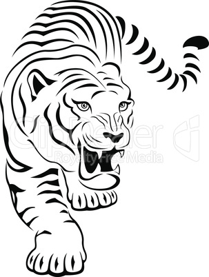 Aggressive tiger on hunting