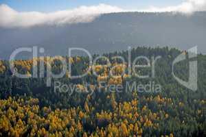 Blick auf die herbstlich verfärbten Wälder der Vogesen