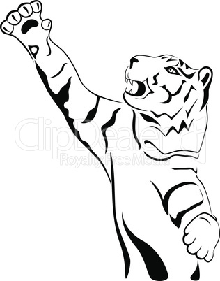 Adult tiger with his paw held high up