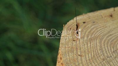 Dragon fly on stump