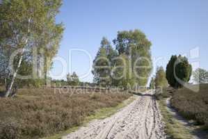 Weg in der Lüneburger Heide bei Undeloh