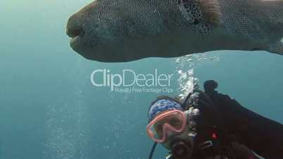 Communication between the diver with the fish arothron in the Andaman sea near Thailand