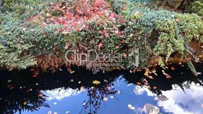 Sunny autumn day at country pond near Krasnodar, Russia