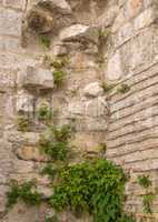 Ancient wall covered with vegetation
