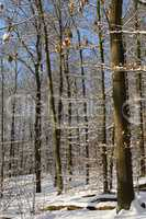 Wald im Winter, forest in winter