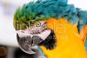 Eye old parrot