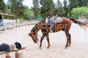 In anticipation jockey