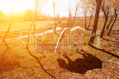 Horse eating grass at Holy Fish Pond