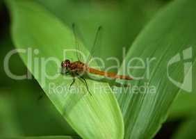 Seasonal Colors and Small Natural Scene
