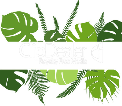 Tropical background with fern and monstera leaves
