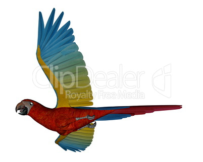 Exotic bird flying isolated on white background: Royalty