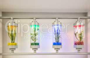 Plants grown in test tubes