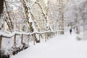 Wandern im Wald mit Schnee, hiking in a forest with snow