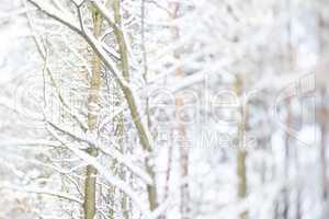 Baum mit Schnee, tree with snow