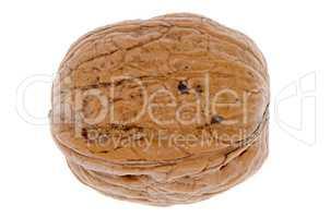 Simple wallnut