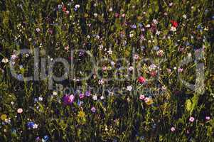 very rich variety flower meadow