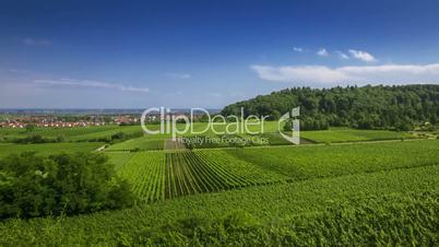 Timelapse of german vineyards in Palatinate