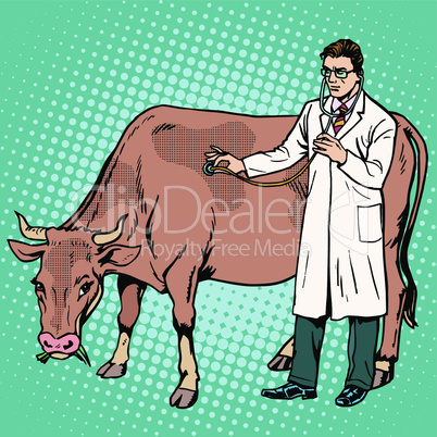 Veterinarian examines a cow farm animal medicine