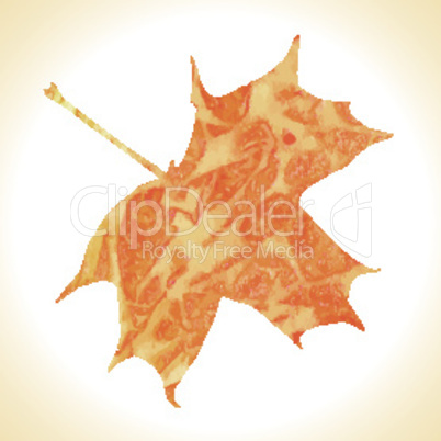 Watercolor autumn maple leaf. Vector illustration