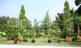 Preparation for planting