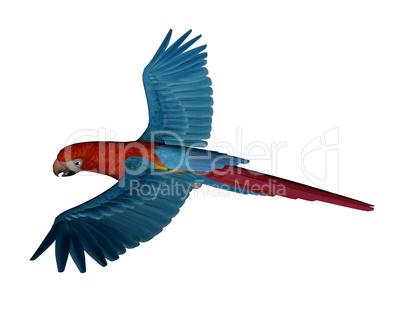 Scarlet macaw, parrot, flying - 3D render