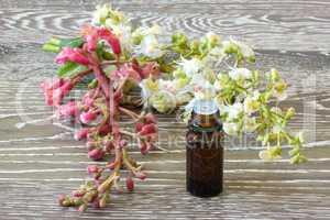 Bachblüten rote und weiße Kastanie