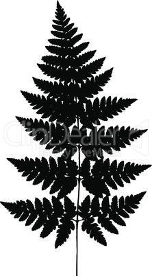 Fern frond black silhouette. Vector illustration. Forest concept.Fern frond black silhouette. Vector illustration. Forest concept.