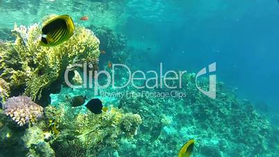 Underwater, corals and clear water.