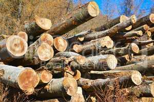 Stapel gefällter Bäume