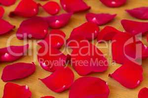 The red rose petals.