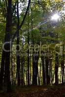Ein Sonnestrahl im Frühlingswald