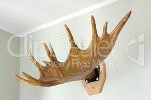 Trophy of the hunter - a horn of an elk. It is presented as an i