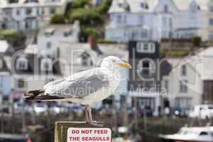 Bitte die Möwe nicht füttern, Looe, Cornwall