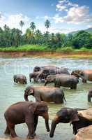 Herd of elefants