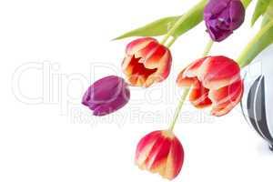 Tulpen in einer Vase